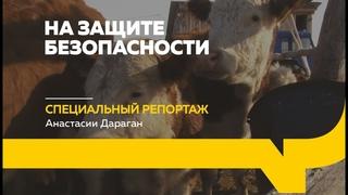 Как ветеринары следят за здоровьем животных в Алтайском крае | Специальный репортаж