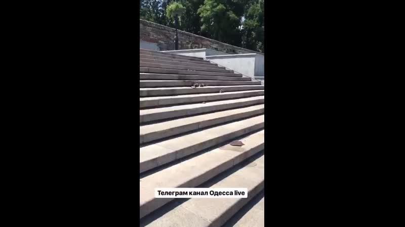 Свалка в Одессе на Потемкинской лестнице