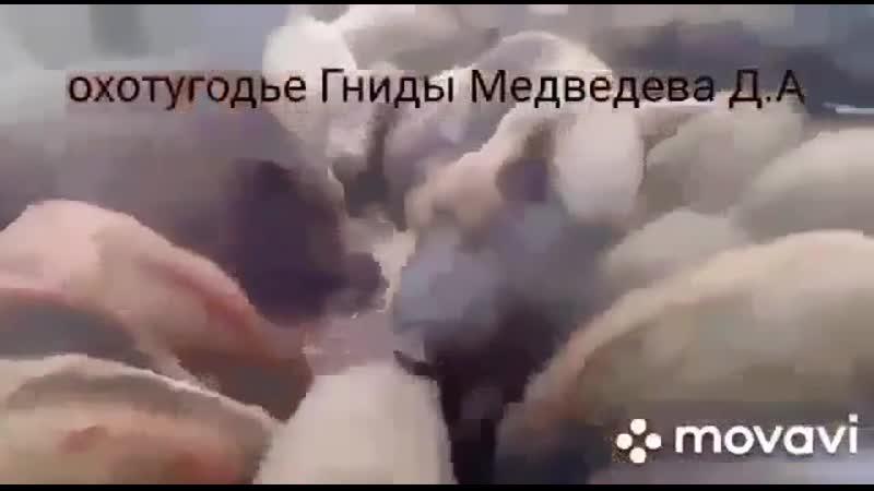 VIDEO-2020-01-30-18-47-09.mp4