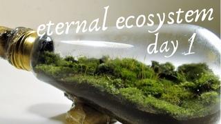 DIY - Endless Ecosystem in a Light Bulb - How To Set Up A Tiny Terrarium / Mossarium