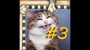 СМЕШНЫЕ КОТЫ Смешная видео нарезка про котов, кошек и котиков 2021! выпуск 3