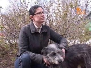 Гуманное отношение к животным наболевшая тема неравнодушных ельчан