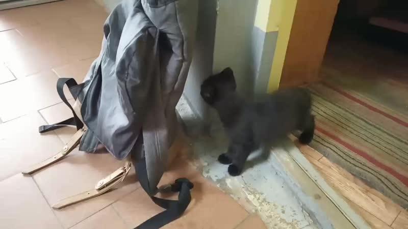 Черненький котеночек
