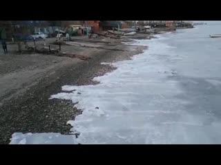 Живое Азовское море. 27 ноября.
