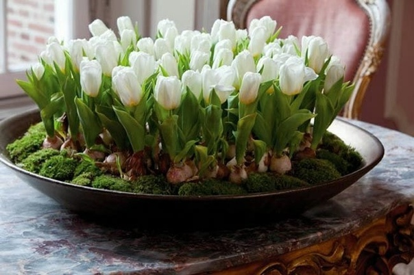 Букет тюльпанов можно вырастить без всякой оранжереи и к нужному вам сроку.