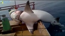 Top 5 Big Fish Caught in The Sea are Recorded By Cameras Amazing Fishing Skills Big Tuna