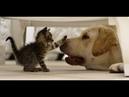 Враг или друг Смешные кошки и собаки - подборка приколов !