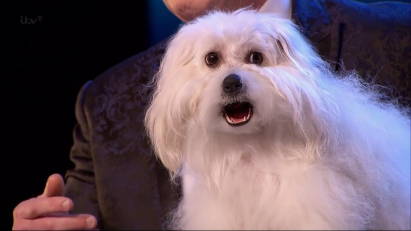 Britain's Got Talent 2015 S09E01 Marc Métral with his Hilarious Talking Singing Dog Wendy Full Video