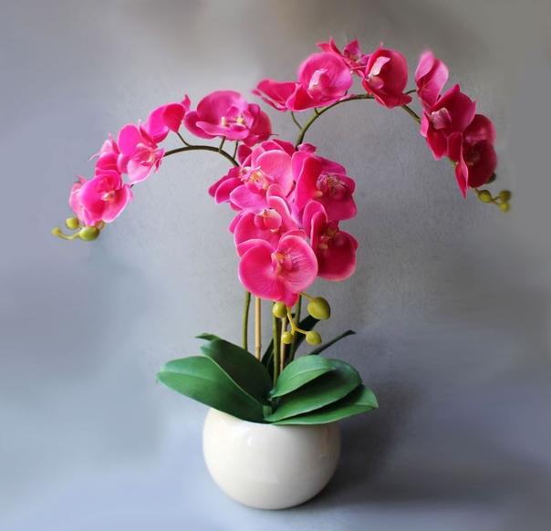 Ошибки ухода за орхидеями.