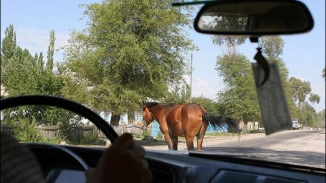В КЧР разбился автомобиль из-за выбежавшей на дорогу лошади