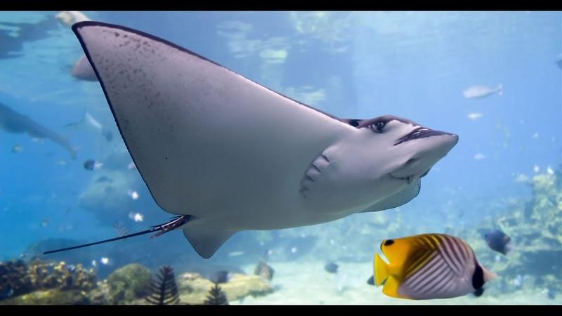 Дикая природа Удивительная природа барьерного рифа Австралии HD