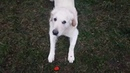 The dogs have again developed something remarkable for the discipline @ Bivalium Mx sr Animal