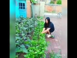Интересный способ выращивания bynthtcysq cgjcj, dshfobdfybz