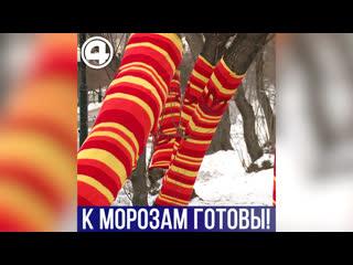 Одетые деревья в Екатеринбурге