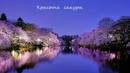 Красота сакуры