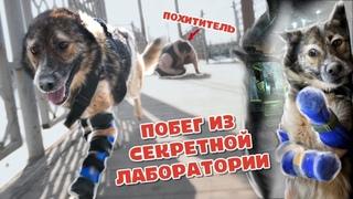 Пёс попал в СЕКРЕТНУЮ лабораторию и ушёл на НОВЫХ лапах!