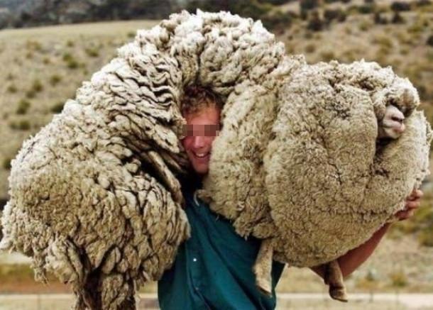 В КЧР задержали овцекрада