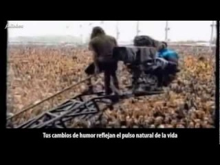 THE WAYSEER MANIFESTO Subtitulos en Español Video HD