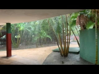 Небольшой тропический дождик