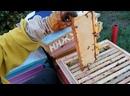Церебрянный сотовый мёд