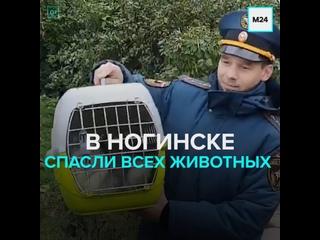 В Ногинске спасли всех животных из разрушенного взрывом газа здания — Москва 24