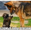 Фотоальбом Сулушаш Алиевой