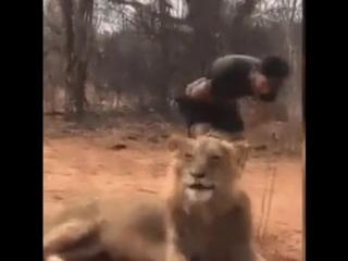 Чихнул лев, а сердце остановилось у него