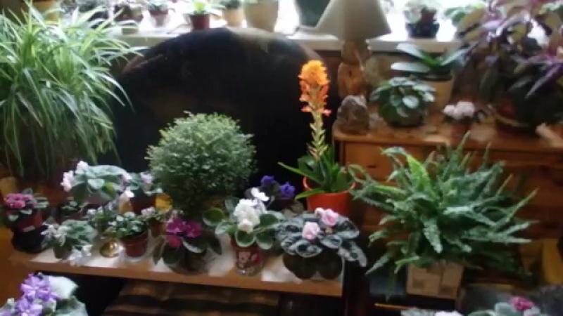 Как я ухаживаю за растениям