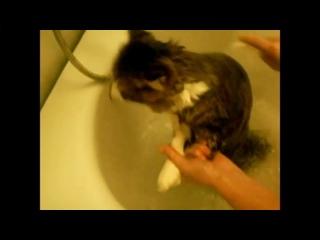Кот матюкается во время купания.mp4