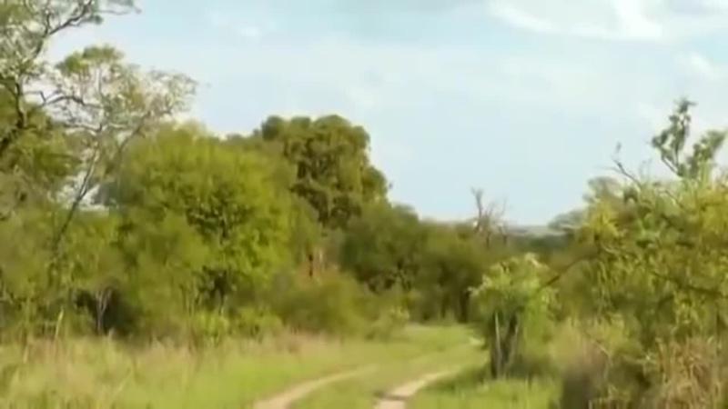 Документальный фильм BBC О природе и животных дикой Африки
