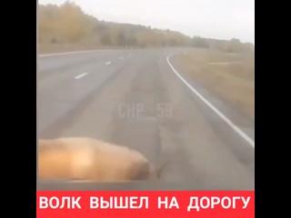 Video by ЧП и ДТП | Чрезвычайное происшествие | ПЕРМЬ