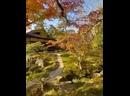 Чудесная природа Киото 😍