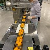 В Усмани для работников овощного предприятия построят целый микрорайон