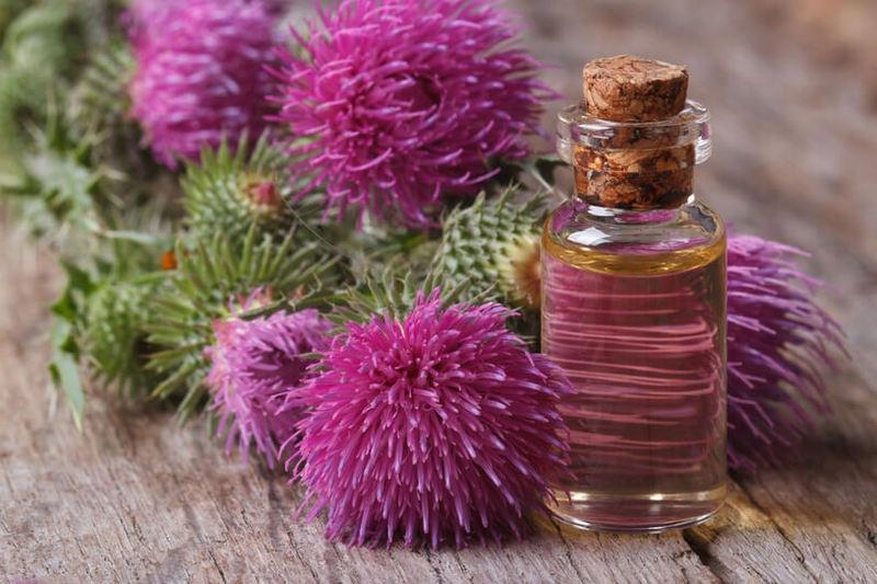 Репейное масло для волос – как пользоваться?