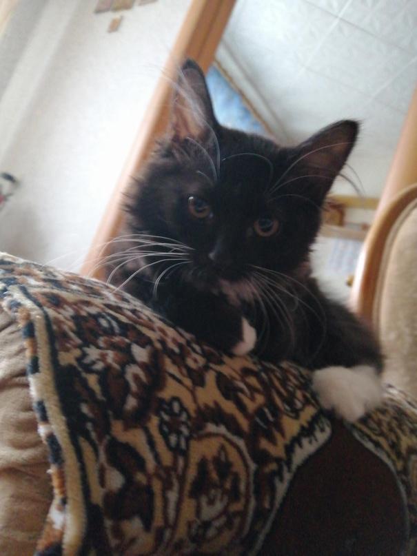 Котенок, пушистая девочка три месяца, | Объявления Орска и Новотроицка №18087