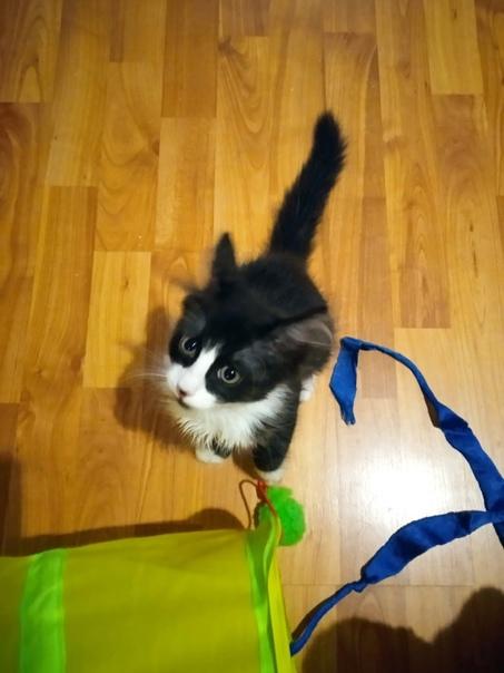 Котёнок Марсик ищет дом. Возраст 2 месяца. Лоток на отлич...