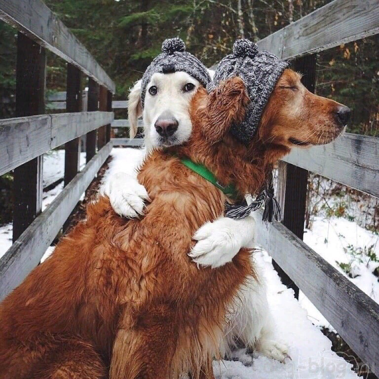 Для многих собак новогодняя ночь — это
