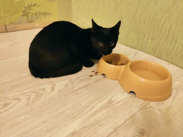 Найден кот пр-д Лермонтова д.2 , черный, возраст о...