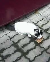 Кто потерял кошечку? Беленькая, с чёрными пятнами,...