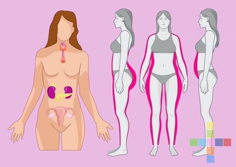 Чем питаться для баланса гормонов?