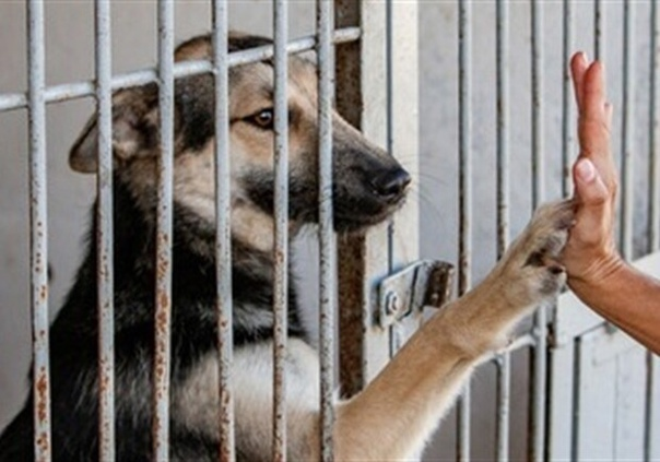 Якутску необходим приют для безнадзорных животных