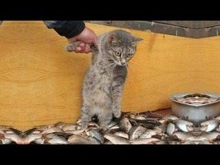 ПРИКОЛЫ С ЖИВОТНЫМИ ДО СЛЕЗ / Смешные КОТЫ 2021 / Приколы с КОТАМИ / Funny ANIMALS video #13