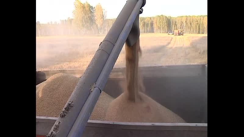 Аграрии Болотнинского района завершили уборочную кампанию 2020