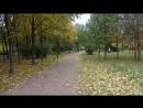 Листья желтые по городу кружаться..(Листопад)