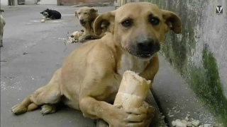 Today is day of... International Day of Stray Dog, today is July 27th