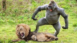 Матери в Деле! Безумные Битвы Животных Снятые на Камеру