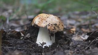 БЕЛЫЕ пошли! Собираем грибы рядом с городом. Красивые места Омской области.