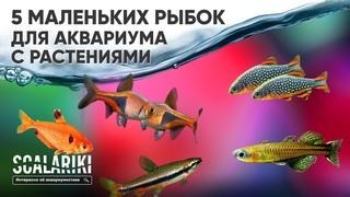 5 самых маленьких рыбок для аквариума с живыми растениями. Часть 1