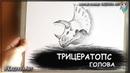 Как нарисовать голову Трицератопса карандашом. Динозавр