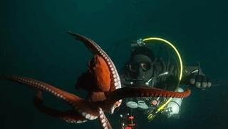 Вести.Ru: Гигантский осьминог всплыл на встречу с владивостокскими дайверами
